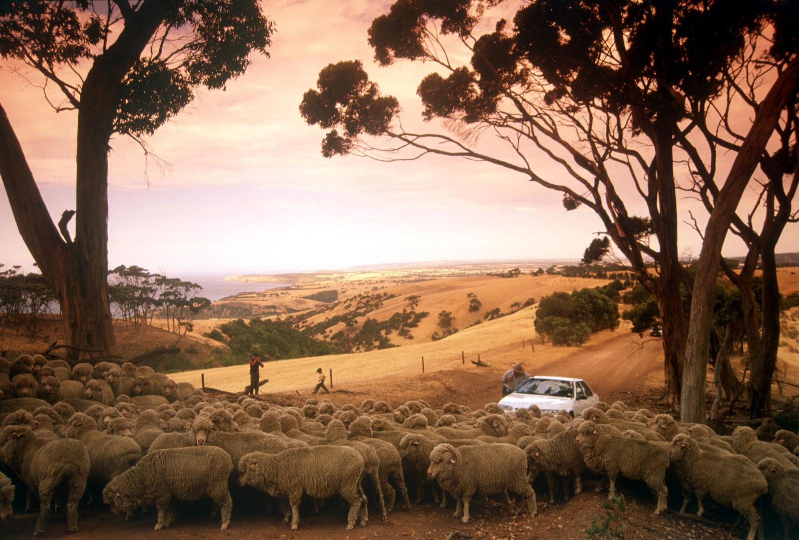 Self Drive, Kangaroo Island
